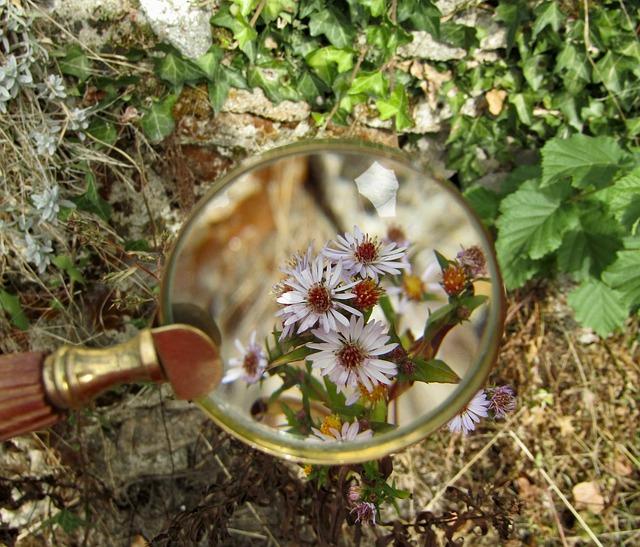 虫眼鏡で見る花
